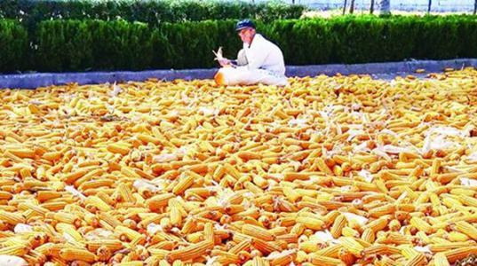 玉米今天的大跌是为了以后的暴涨???