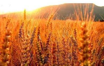 事件解读|未来粮食产业将呈现这5大趋势