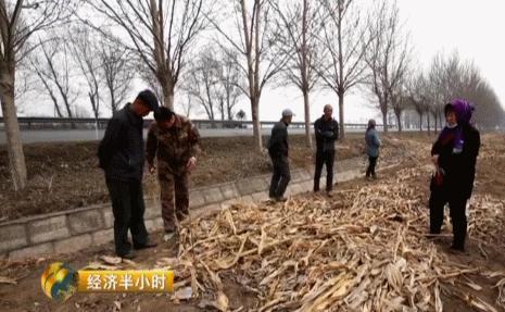 """央视揭秘:东北""""天价""""玉米!他只用了4招"""