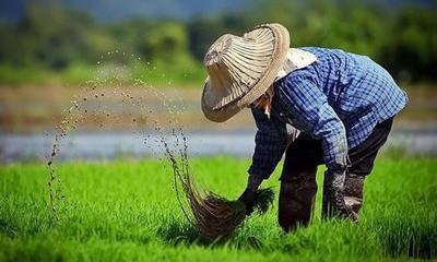 今年做农业必拿的10大专项补贴,总额1834万!看你能拿几项