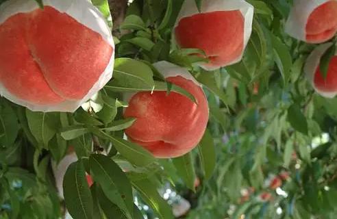 种植业迎来大考!95%果蔬种植户都关注这几点