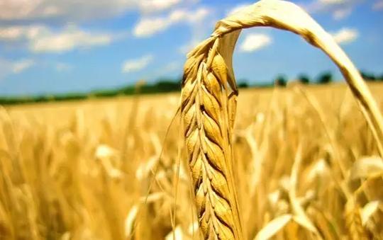 种地必看:农业保险赔偿范围扩大!农资成本、地租成本都可获得赔偿!