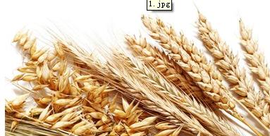 2017年国家临时存储小麦收购计划的通知