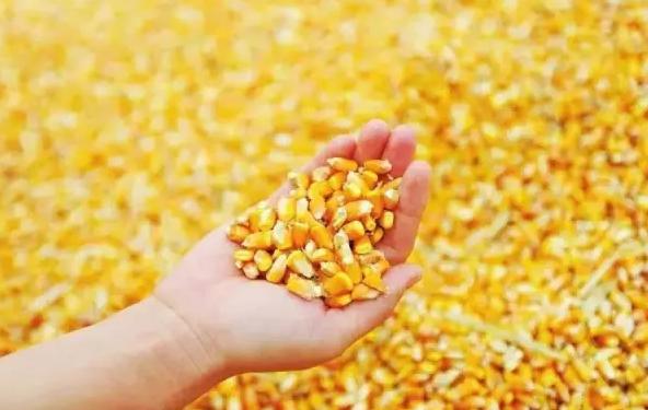 黑龙江:玉米、大豆补贴政策即将出台!教你如何领到补贴!