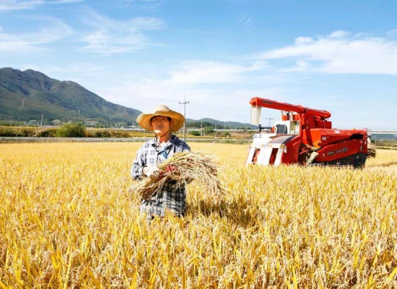 新模式|4大现代农业种植模式,13种栽培方式,值得收藏!