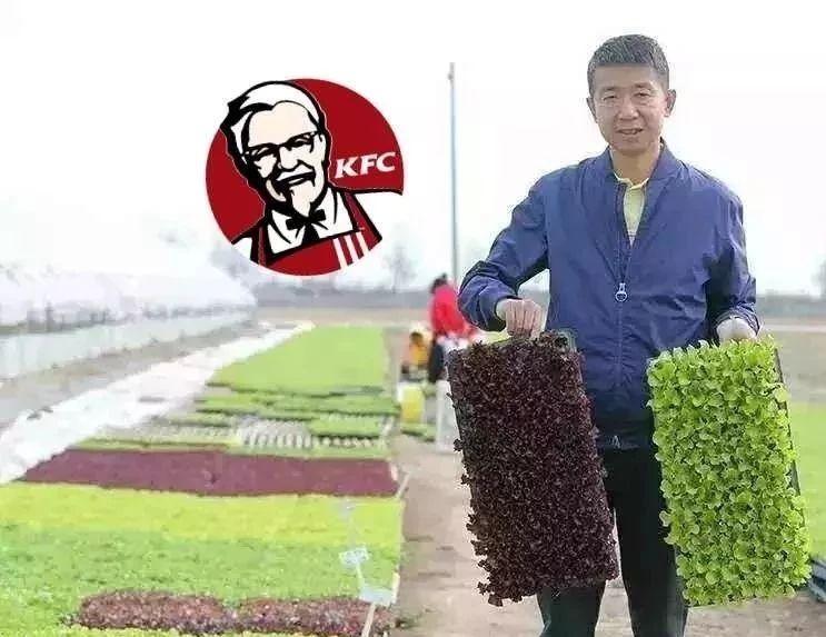 他是肯德基背后的生菜大王,年入4.8亿,生菜出口20余国家!