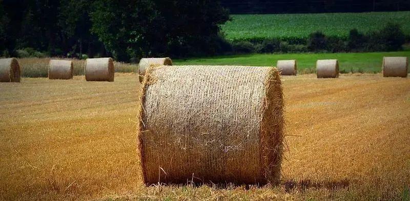 三农日报|政策:国家发力农业固废回收利用;业内:小农户难以有效对接大市场