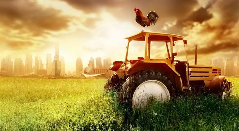 15大农业合作模式(含案例)