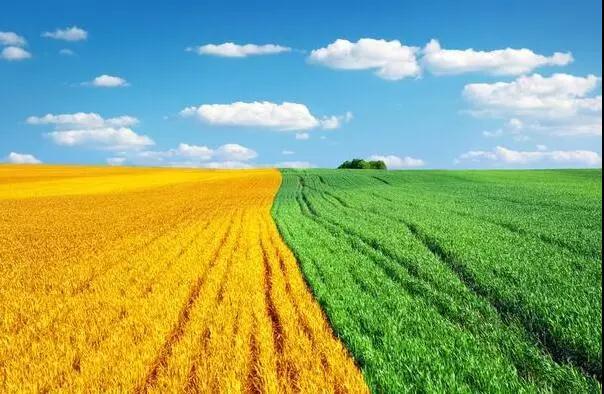 三农日报 告诫!避免盲目扩张玉米生产;农机合作社成重点补助组织