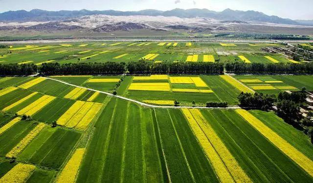 官宣!荷兰农业值得中国学习!(附6个模式)