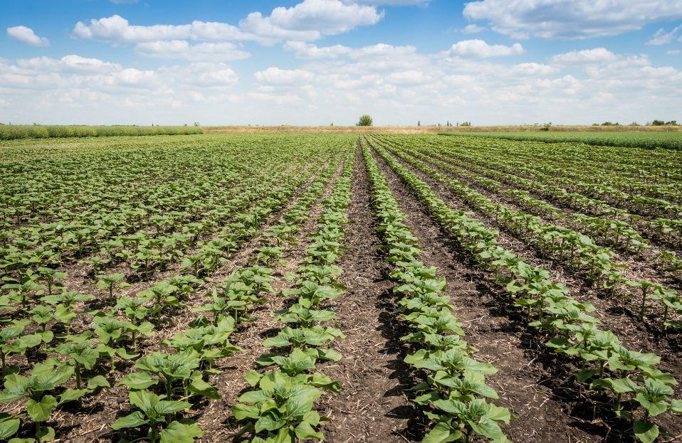 农业领域的这一万亿大市场,再不出手就晚了!