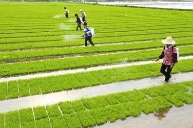 农业服务业:现代农业发展的新引擎
