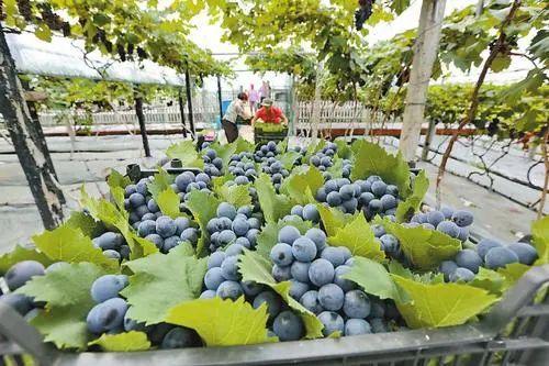 【政策】农业农村部:家庭农场、农民合作社有这些扶持政策