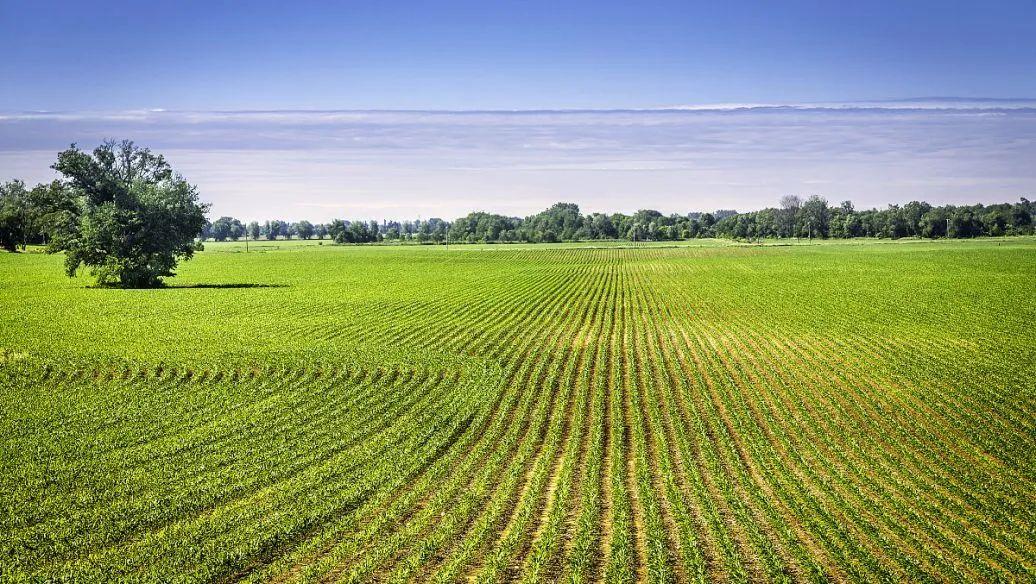 【冷知识】农场、合作社、农业公司有啥区别?补贴优势是什么?