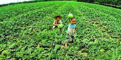 分析!农民合作社的现状与建议都有哪些?