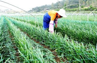 农民合作社到底该如何经营?