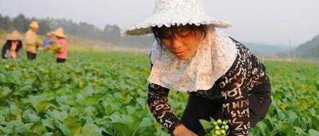 2017有机肥替代化肥大方向已定:3亿亩蔬菜