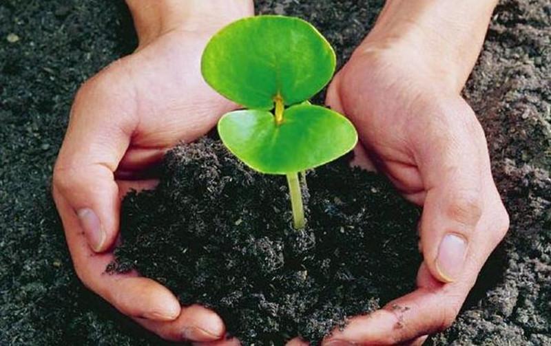 农业部:有机肥替代化肥试点县名单公布!中央财政专项有你的份吗?