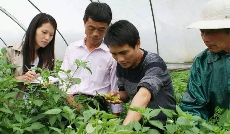 跨国巨头频频布局,杀菌剂为何成为农化市场爆发点?