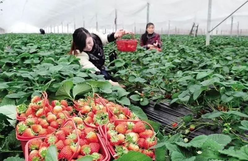 你了解订单农业吗?为啥农资大佬转型都在谈它?