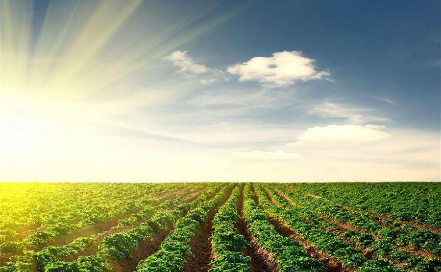 对话|农忙网创始人王闯:农业服务拐点已至,B端市场成未来趋势