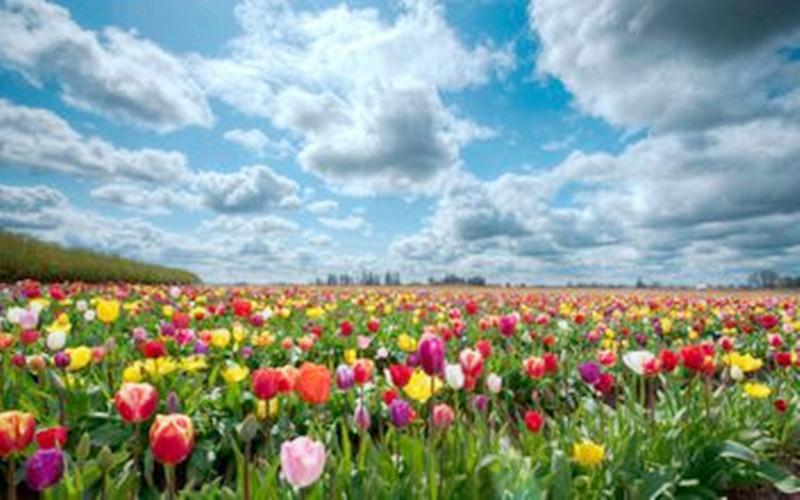 农资行业的困境与希望