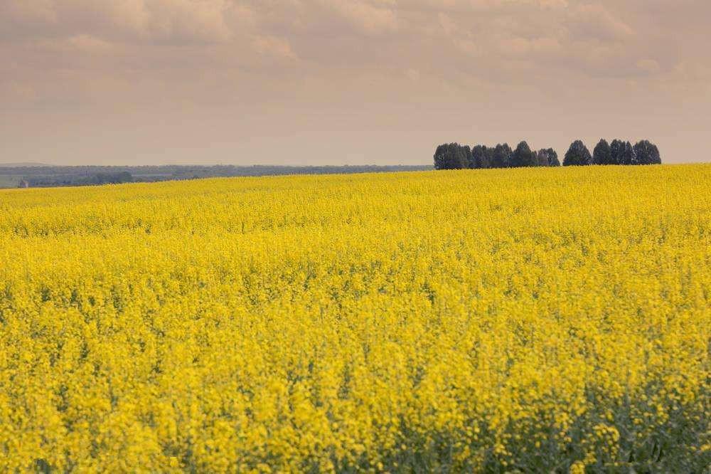看2018年农业发展,农资还是涨涨涨!循环农业是机会!