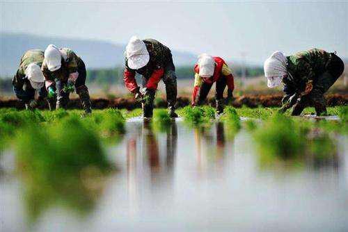 大深度|农资行业的新圈地运动