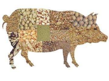 养猪人选择饲料的7个坑