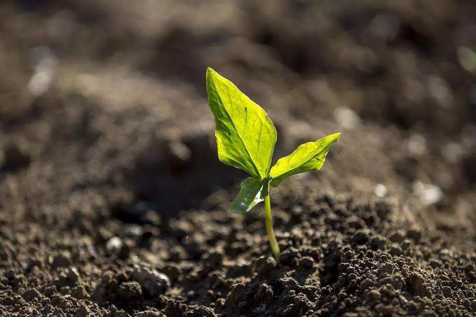 国家政策扶持!产业规模达千亿级!有机肥或成新农业淘金风口
