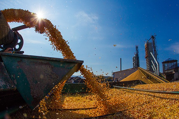 农资行业 中国最火的化肥市场
