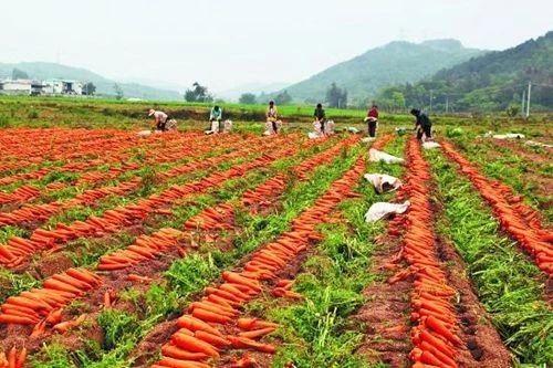 万亿级市场规模!农资行业凸显4大赛道,哪一种模式更符合时代潮流