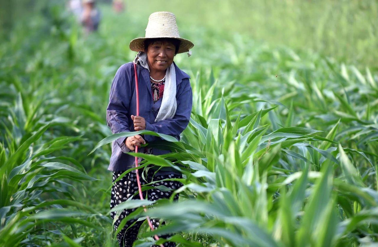 三农日报|国家政策加码支持农资企业复产;我国智能灌溉、智能温室发展速度加快