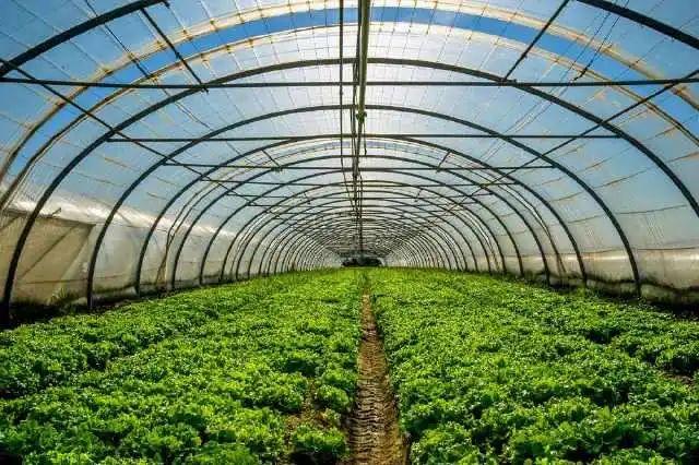 【上市公司】辉隆股份:做现代农业产业链的综合服务商