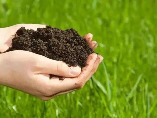 【政策解读】农业农村部:在233个重点县开展有机肥替代化肥试点