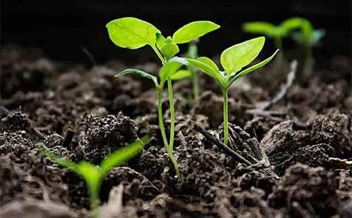 【知识问答】肥料知识100问(从此彻底懂了肥料)