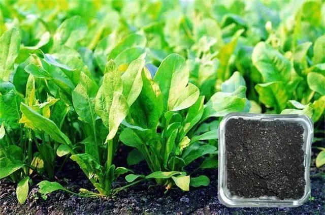 【产业分析】中国生物有机肥的发展现状与趋势