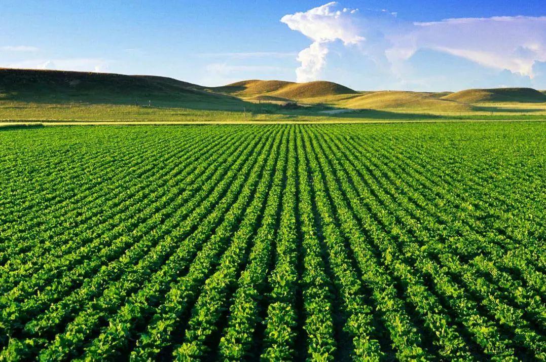 【大佬分享】陈义媛:中国农资市场变迁与农业资本化的隐性路径