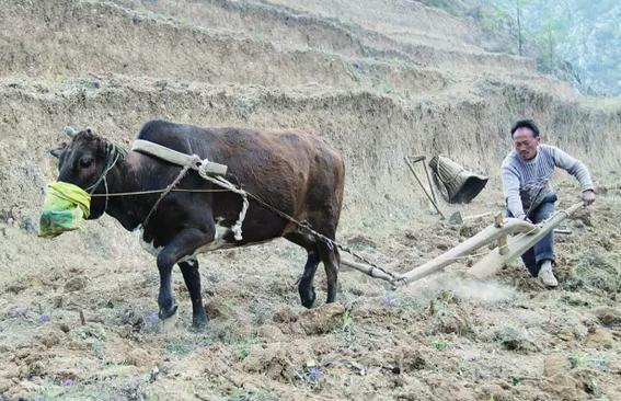 触目惊心的撂荒!肥价触底盘、农民不赚钱,农业这条产业链如何运转?