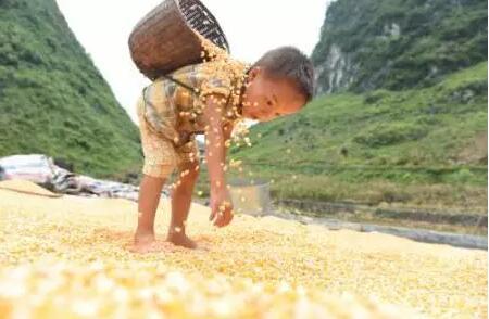 警惕!未来10年,中国这4大农业问题必须解决