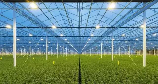 学习|荷兰农业发达的秘密就隐藏这里:温室种植!