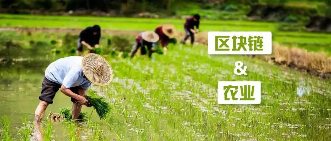 农业新趋势|2019区块链+农业如何淘金