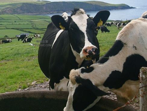 物联网应用于农业中的好处是什么
