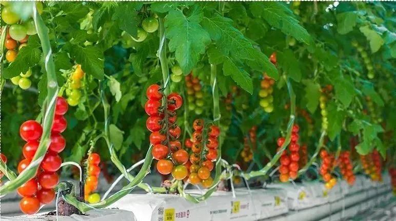 【农业模式】物联网技术在智能温室中的应用