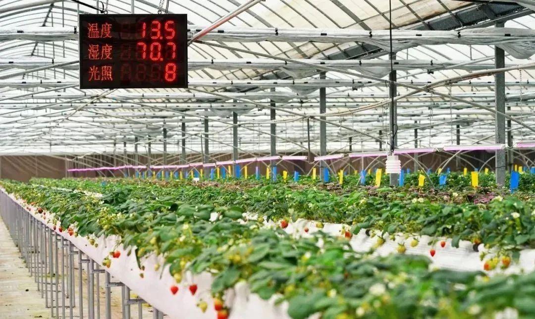 【干货总结】如何做好现代农业园区运营?