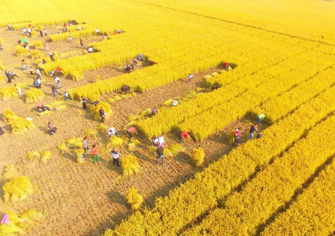 千年大变局:农业领域的若干颠覆性技术,淘汰、颠覆正在发生...