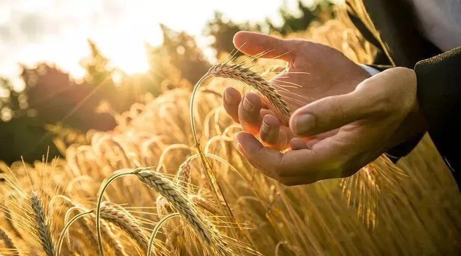 区块链技术:重构农业价值链!