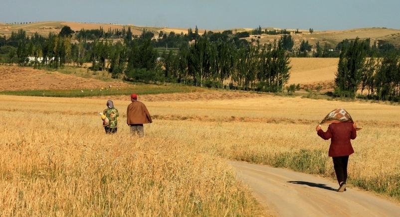 除了土地、户口之外,农民一般谈论啥?