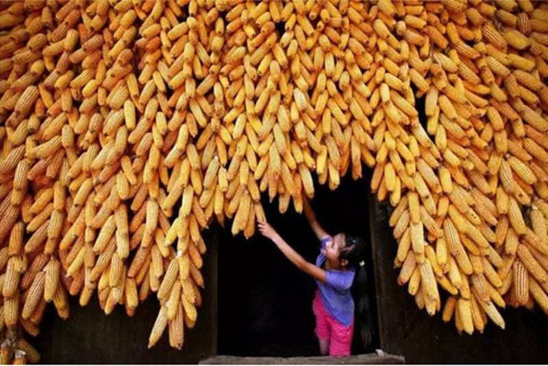专家解读|中国农业之痛:90个中国农民不抵1个美国农民