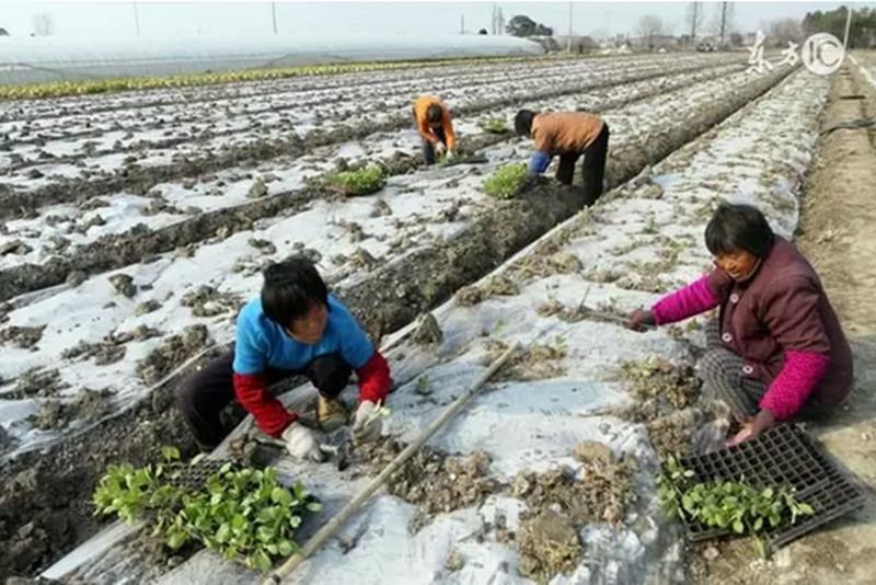 未来五年,农村三大机遇,农民千万不要错过,错过再穷十年